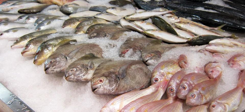 seafood9